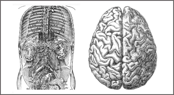 Abdominal Brain final